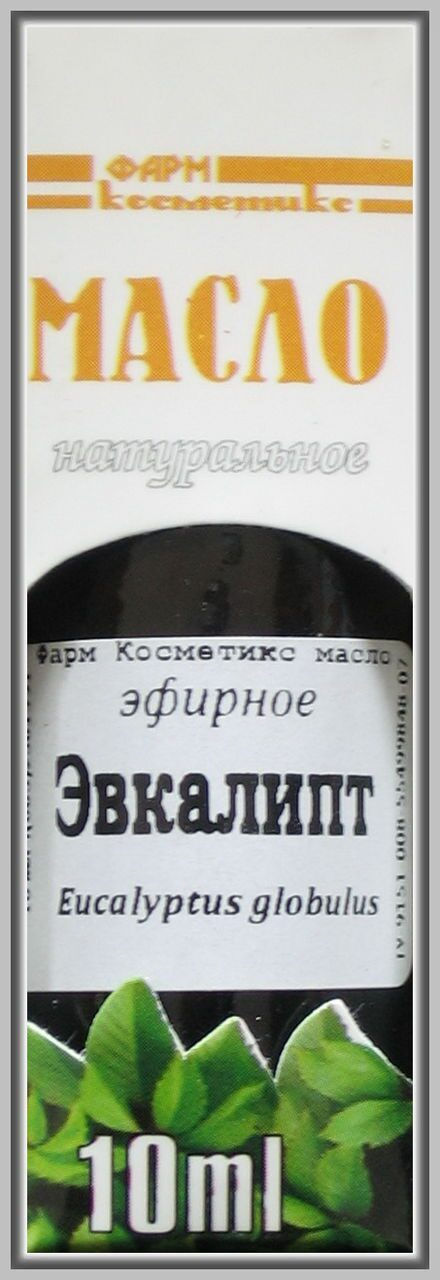 эвкалипт шаровидный